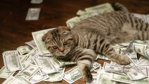 The cat and money