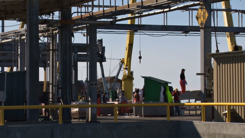 HOMER, AK - CIRCA 2011: A day on the fish docks. Halibut boat being offloaded by