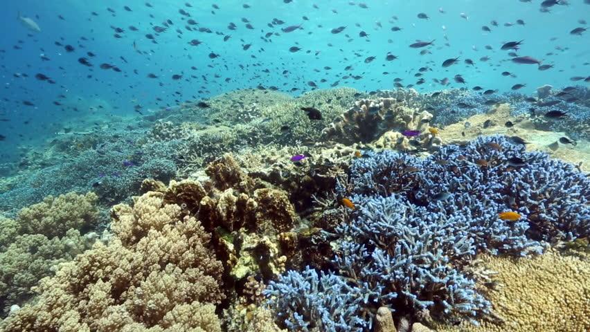 Coral reef biodiversity at Kakaban Island, Kalimantan #31315138