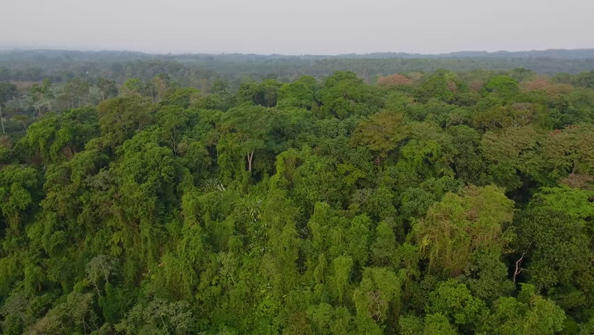 CIRCA 2010s - Guatemala - Aerial over generic jungle and rainforest in Guatemala.
