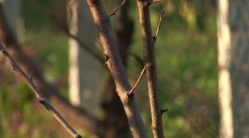 evergreen tree bark background - photo #14