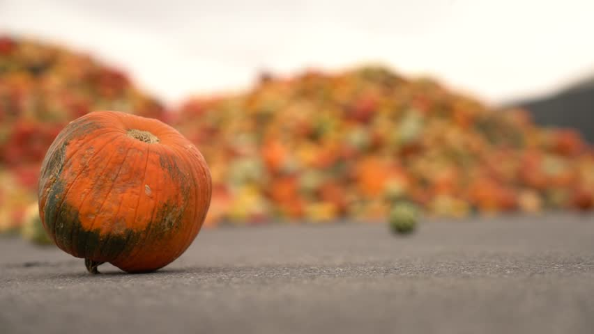 Food over production of pumpkins at a waste dump