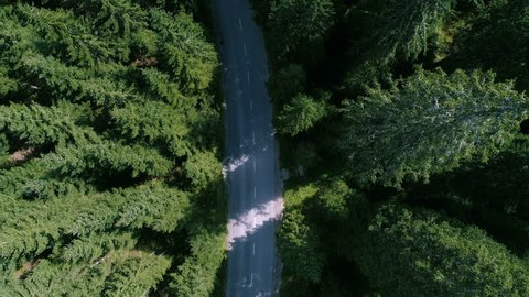 Aerial - Top down view of road biker cycling on the road through the forest, long shot