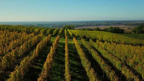 Aerial view bordeaux vineyard, landscape vineyard south west of france, europe