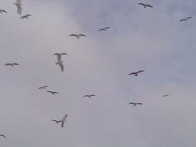 Large flock of gulls flying in beach