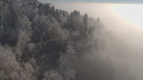 AERIAL: Flying above beautiful white icy forest wrapped in morning fog on cold winter day. Stunning frozen treetops on misty winter morning. Thick fog over hoarfrost forest trees in sunny winter