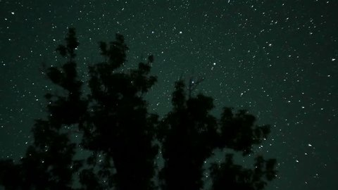 Moving Stars in Night Sky over Trees. Time Lapse. Starry sky rotates against a silhouette of trees.