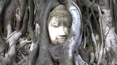 Amazing Buddha head statue in bodhi tree roots.