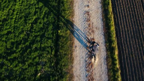 Person bicycling between farm fields aerial top view 4K. Drone flying above single person in focus tracking while riding on gravel road. Big shadow on ground.