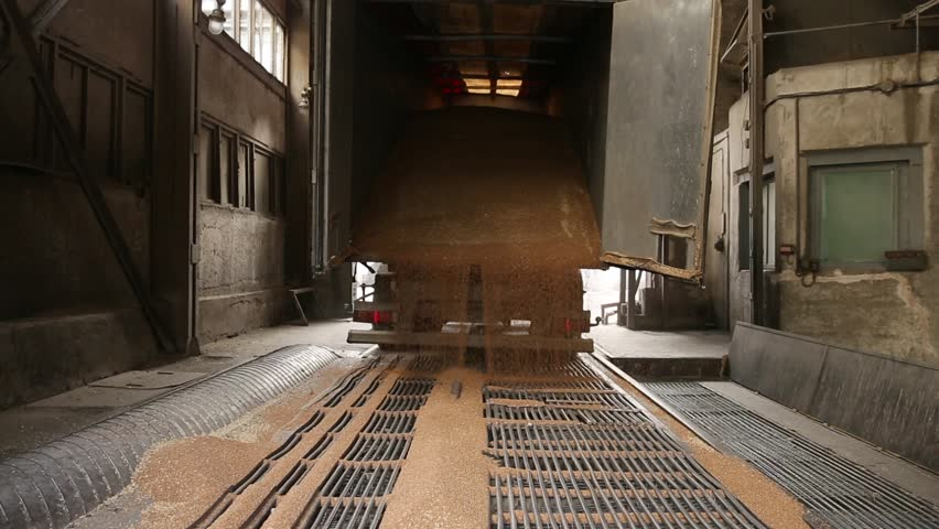 Grain truck unloading. Wheat is unloaded from a truck at a flour mill. Unloading of wheat grain. Flour mill production stage. Transportation of wheat in a truck to a mill. Granary in the milling plant