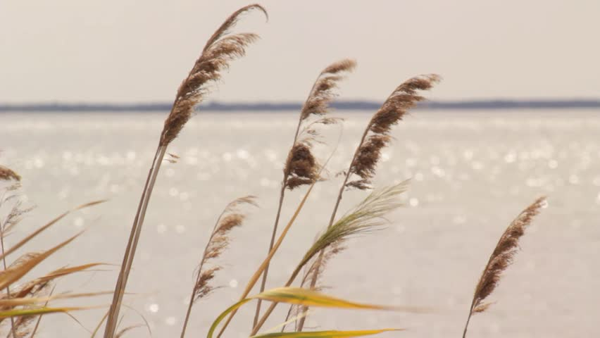 Image result for a reed shaken by the wind