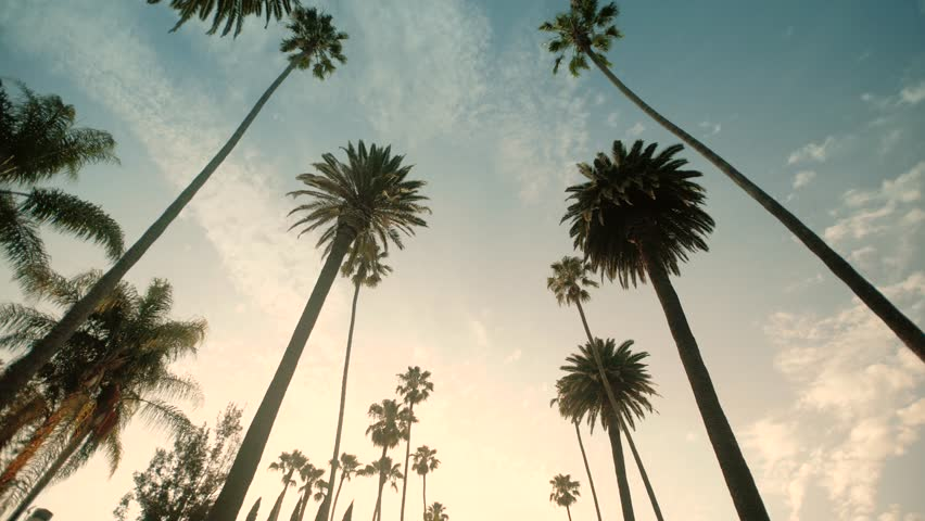 Driving through Palm Trees on Beverly Drive, blue sky, wide shot | Shutterstock HD Video #32372428