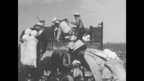 1950s: UNITED STATES: migrant workers gather crops from field. People read books