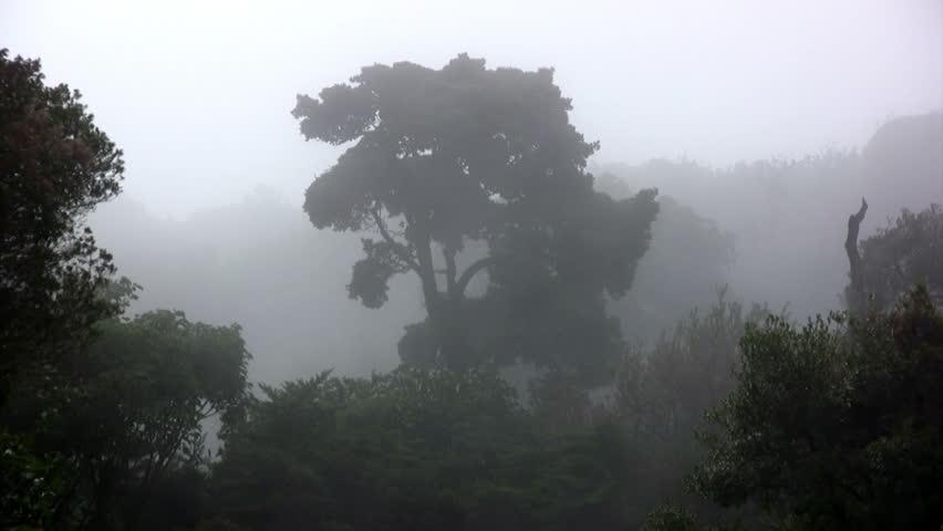 cloud forest Monteverde ( Costa Rica ) June 2012