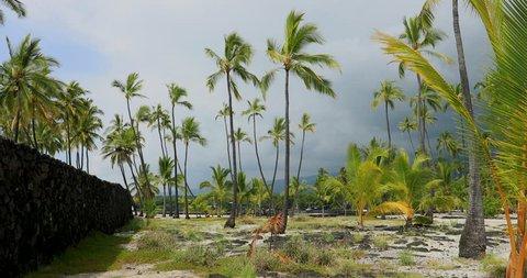 KONA, HAWAII - 16 SEP 2017: Tropical garden palm trees sandy park Hawaii pan. National park on tropical coast. Big Island. Economy is tourism based. Tropical beach recreation and fun.
