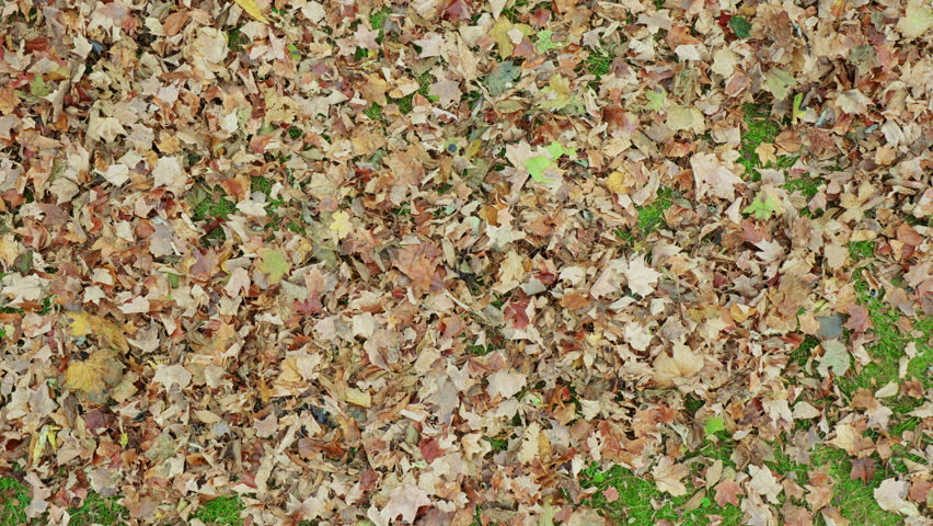 Guy Uses Leaf Blower Overhead. an overhead view of a wide angle pile of leaves as a man uses a leaf blower to move the leaves from the bottom of the screen up top
