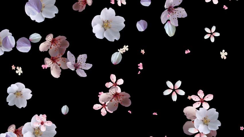 Beautiful Pink White falling down   Shutterstock HD Video #3256966