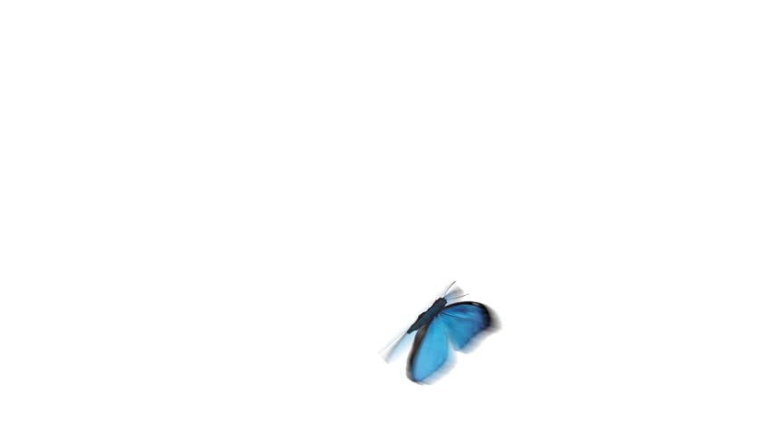 flying butterfly with alpha channel