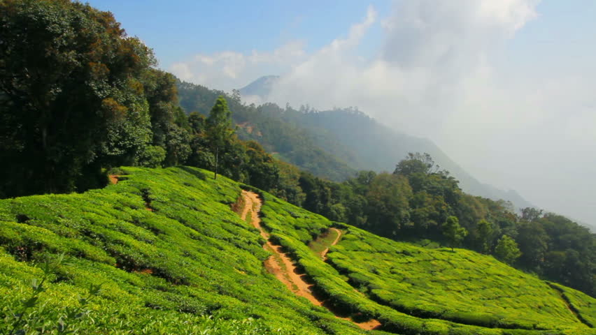 Mountain Tea Plantation In Munnar Stock Footage Video 100 -4612
