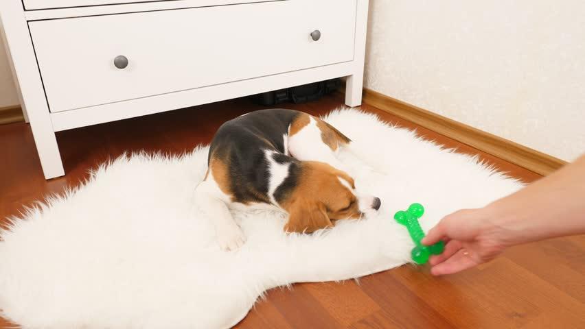 Owner Take Away Green Toy