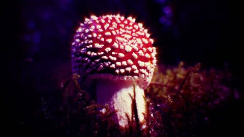 Amanita Muscaria mushroom glowing disco ball light ray effects, Iceland