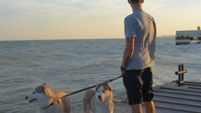 man with two siberian husky dogs walking on beach...