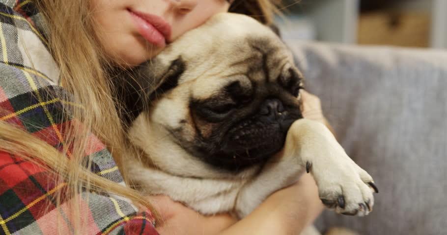 Resultado de imagen para pug dog, hugging