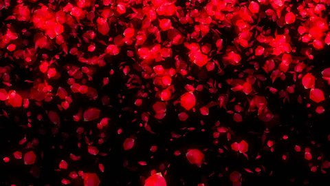 Falling Rose Petals on black background. Seamless loop