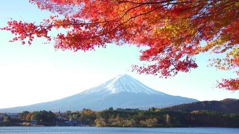 Mt. Fuji and autumn leaves from lake kagaguchi
