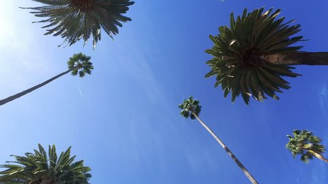 Driving through Beverly Drive. Los Angeles, California. Palm trees against a summer blue sky. United states. Blue.