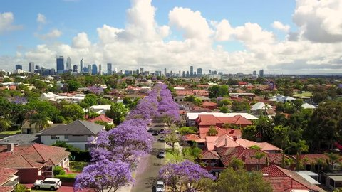 Aerial footage of a street lined with Jacarandas in bloom in South Perth, Western Australia. The Perth city skyline is visible in the distance.