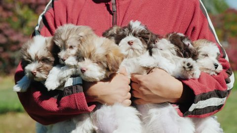 A man holds a lot of puppies in his hands. An arm of happiness, a symbol of the upcoming 2018
