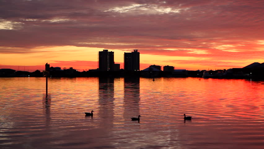 Ducks swim in the foreground on Sabine Bay with condominiums on Pensacola Beach, Florida in the background at sunset.