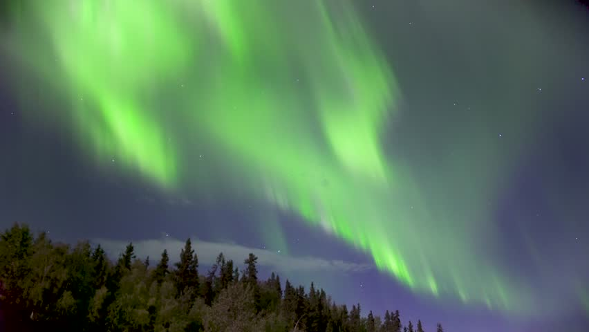 Aurora Borealis (Northern Lights) Dancing Over Trees in Alaska in Real Time (not timelapse) | Shutterstock HD Video #33366268