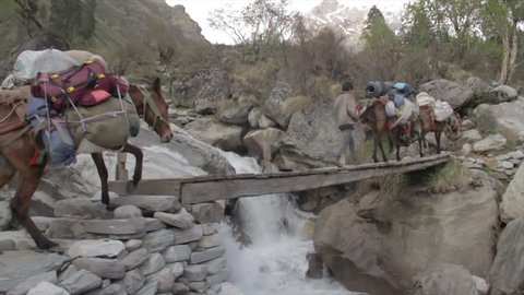Pack horses carrying bags crossing a small wooden bridge over a small stream of mountain river, Himalayas, Uttarakhand, India (2017)