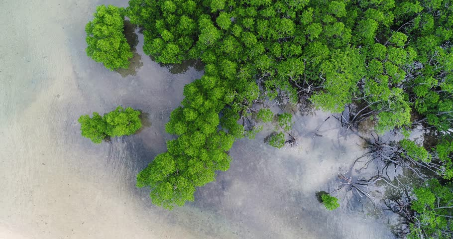 mangrove aerial view | Shutterstock HD Video #33430978