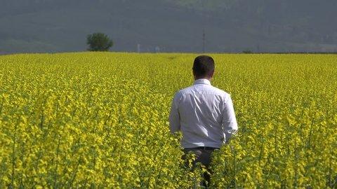 Businessman walking with back in blossom rape field