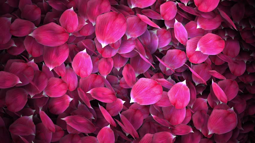 animated rose petals transition with isolate masking channel