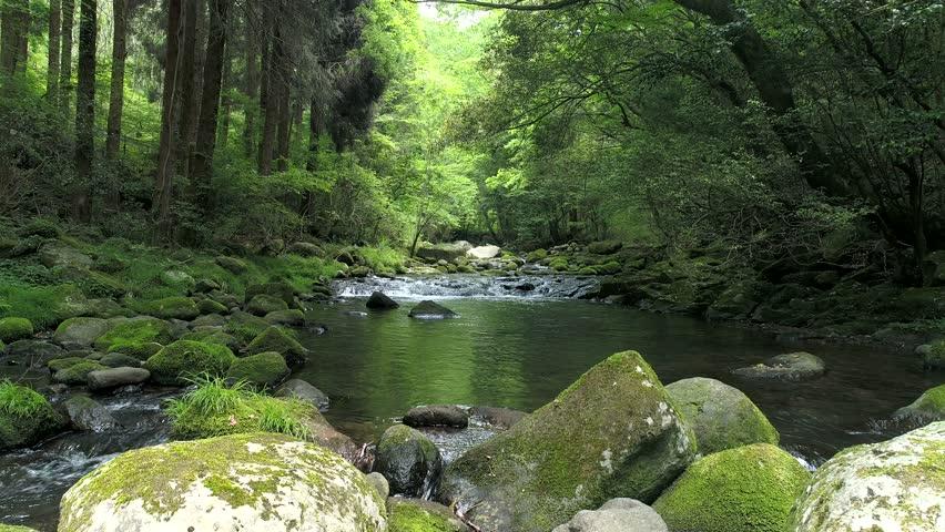 Landscape of clear stream | Shutterstock HD Video #33705838