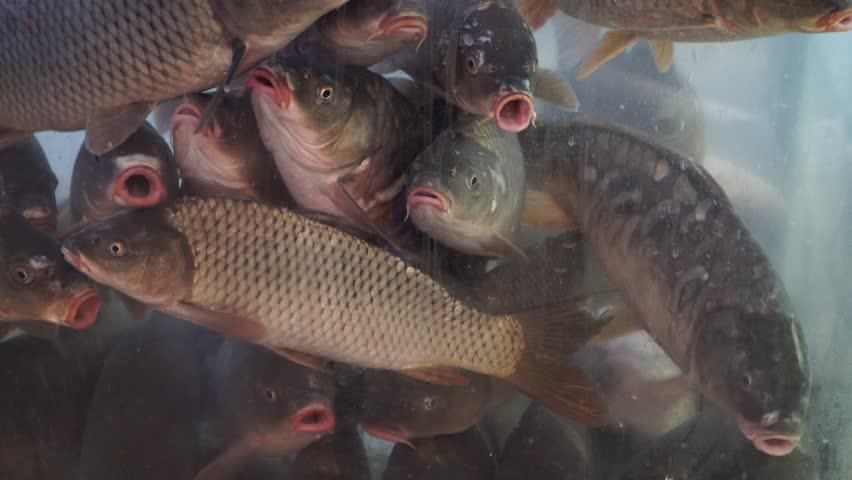 fish market - 4k video