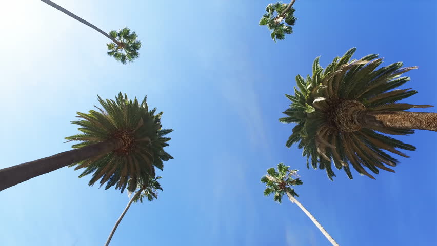 Beverly Hills street with palm trees. Sunny day. Los Angeles, California. United States. | Shutterstock HD Video #33875788