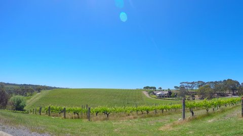 Vehicle POV, static fisheye extra wide view of rows of grape vines, in McLaren Vale, South Australia.