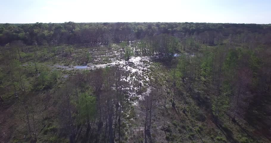 Beautiful drone aerial video flying into the Louisiana swamp bayou filming alligators, birds, trees, boats etc | Shutterstock HD Video #33938548