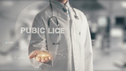 Doctor holding in hand Pubic Lice
