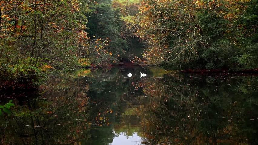 Berlin Tiergarten forest | Shutterstock HD Video #34038358