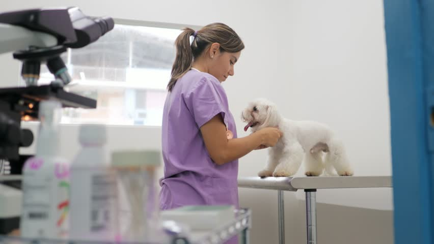 Young latina woman working as veterinary, vet during visit. Animal doctor visiting sick pet in clinic and looking into microscope. People, job, profession and animal care