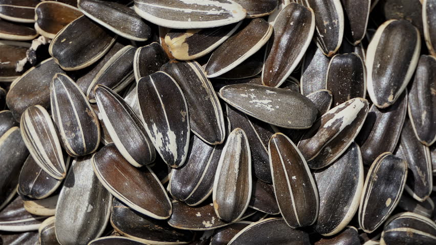 Sunflower seeds close up rotation loopable 4k top view. Food and drinks background. gastronomy concept. gourmet and healthy food concept. organic food. Macro sunflower seeds