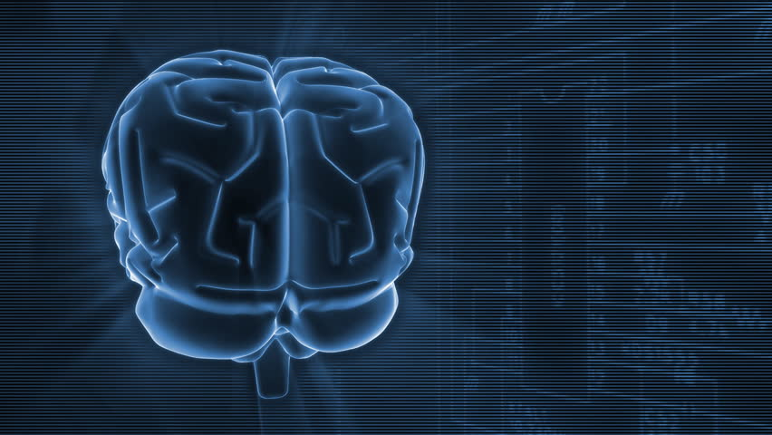 Brain anatomy Stock Video Footage - 4K and HD Video Clips | Shutterstock