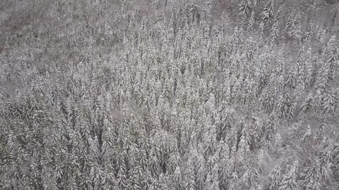 Aerial view. Mountains with trees covered with snow in winter. Winter landscape. Snowing in nature