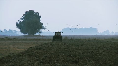 Tractor in the field, preparing the land for cultivation. Birds flying over. Filmed in La Pampa, Argentina.